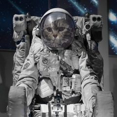 Dinner & A Movie – The Cat From Outer Space