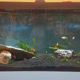 Check Out Our Aquarium