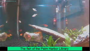 Still of fish tank