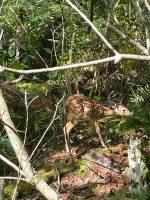 Deer at Park